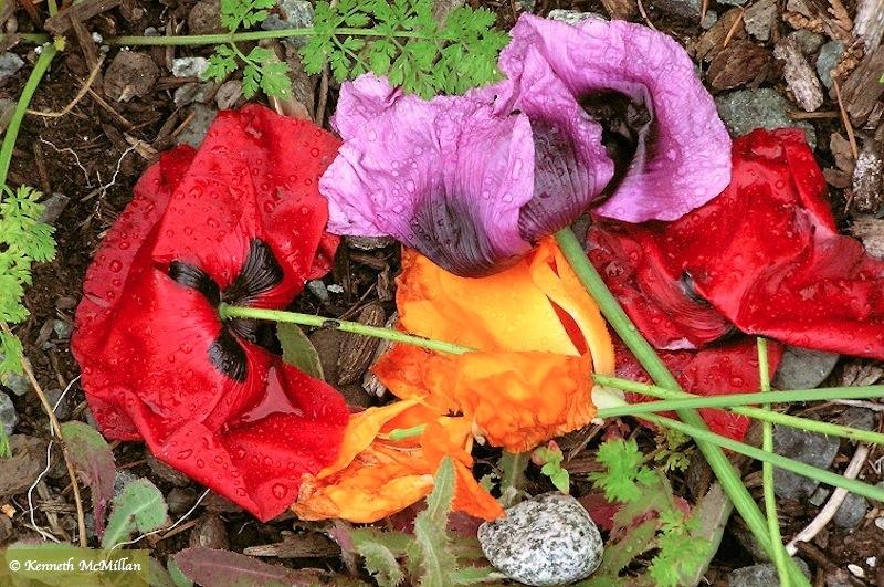 Fallen Bouquet - 2005
