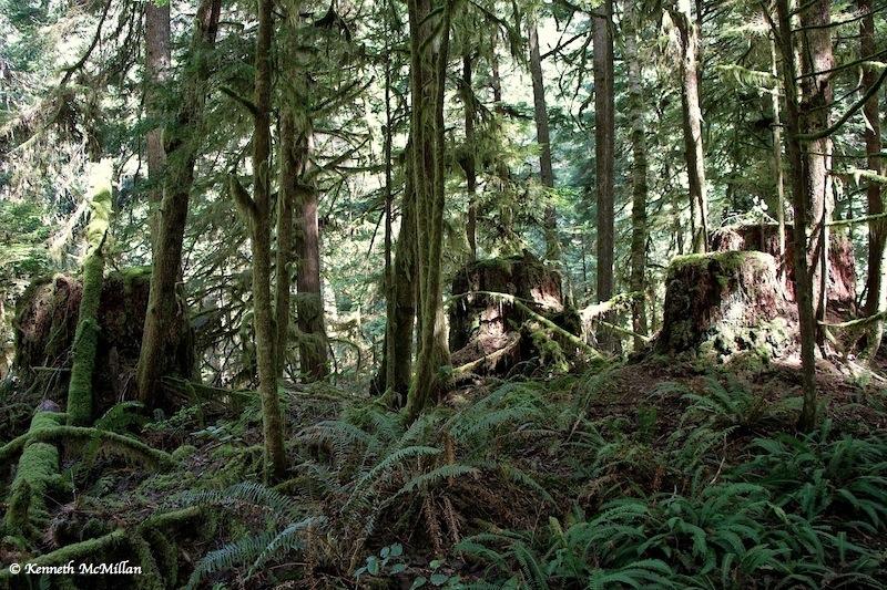 Four old veteran stumps