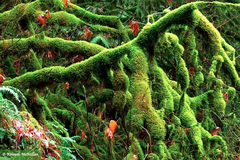Moss Branches
