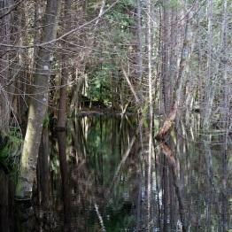 Ever Widening Lakeshore