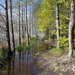 The Flooded Trail