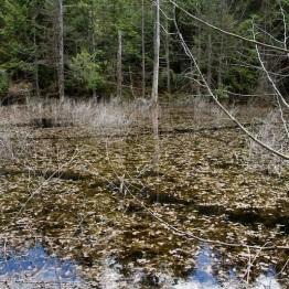 Beaver Trails