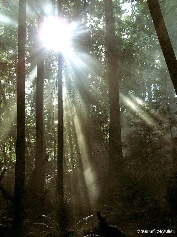 Forest mist (1)_watermarked