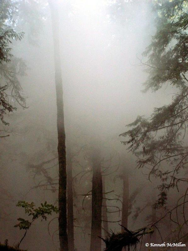 Forest mist (2)_watermarked