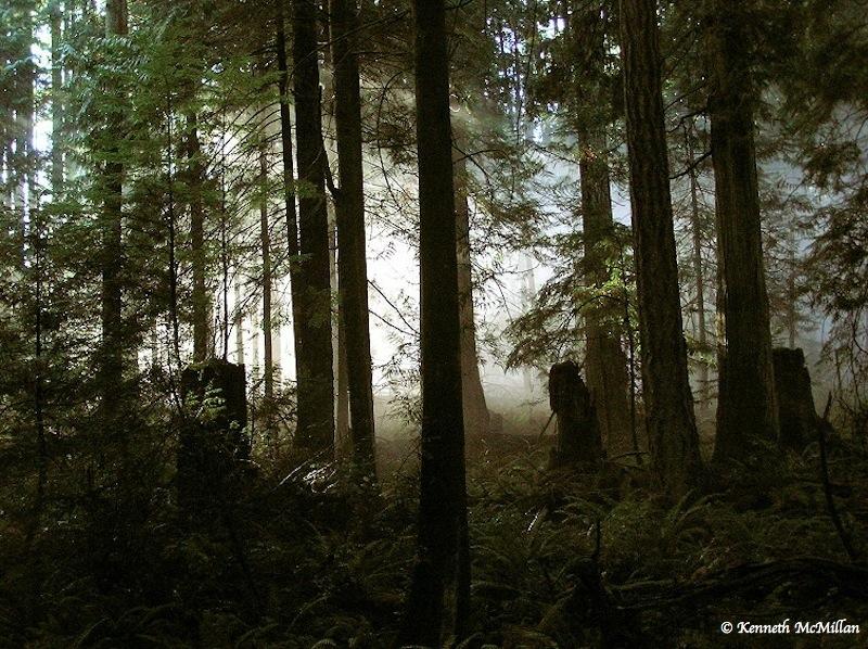 Forest mist (3)_watermarked