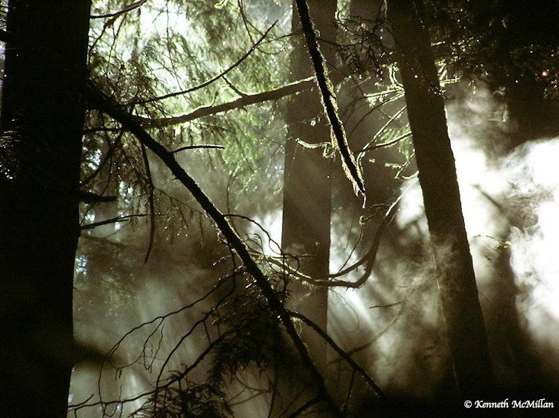 Forest mist (4)_watermarked