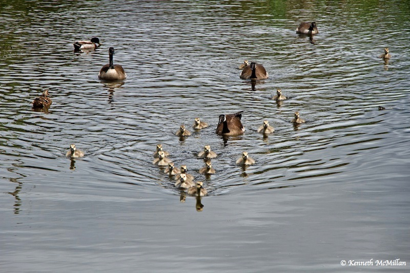 Swimming in Formation