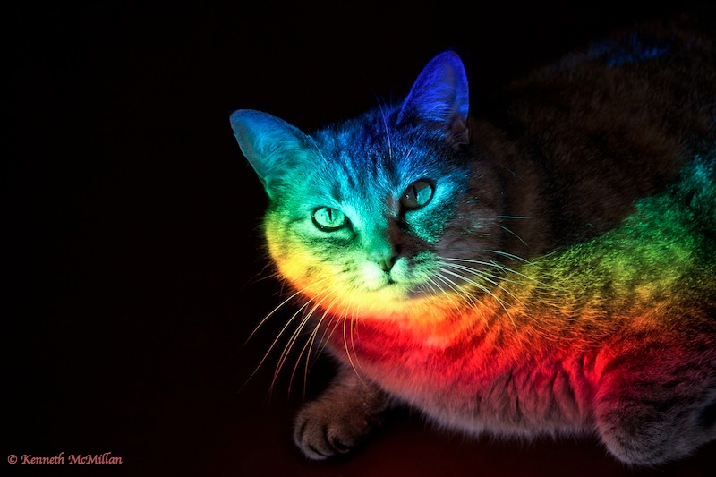 Tigger sunbathing in a prism beam