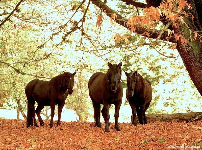 Horses_watermarked