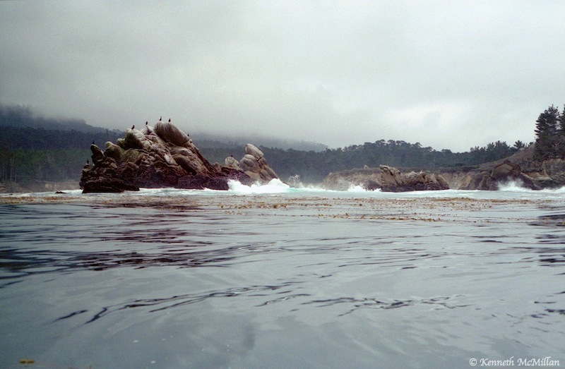 Point Lobos State Park, California, USA