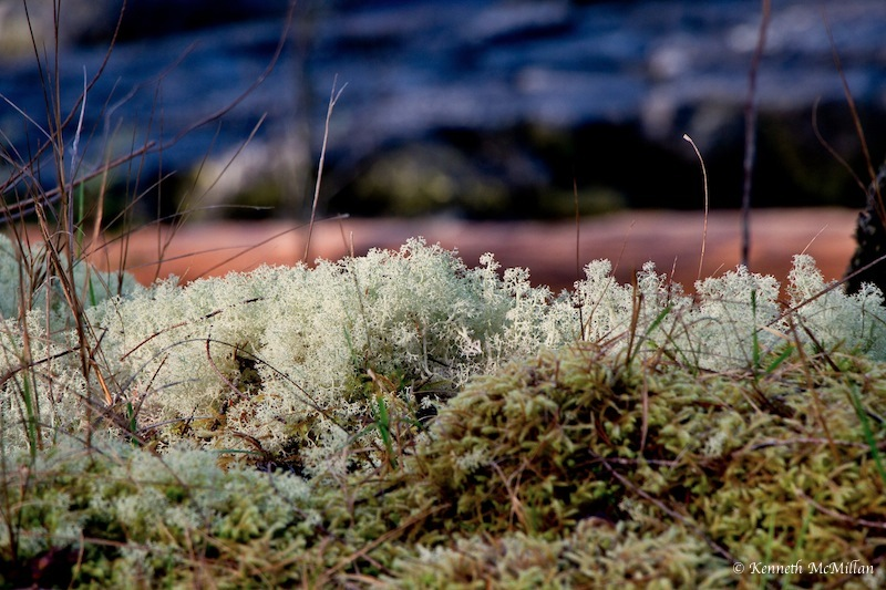 Thick lichens, mosses and succulents are everywhere