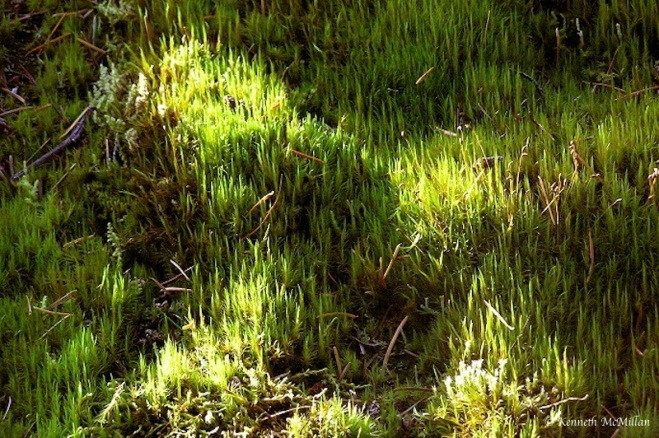 Mosses_watermarked