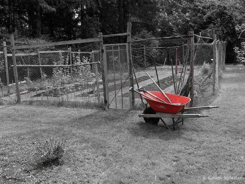 Red Wheelbarrow_watermarked