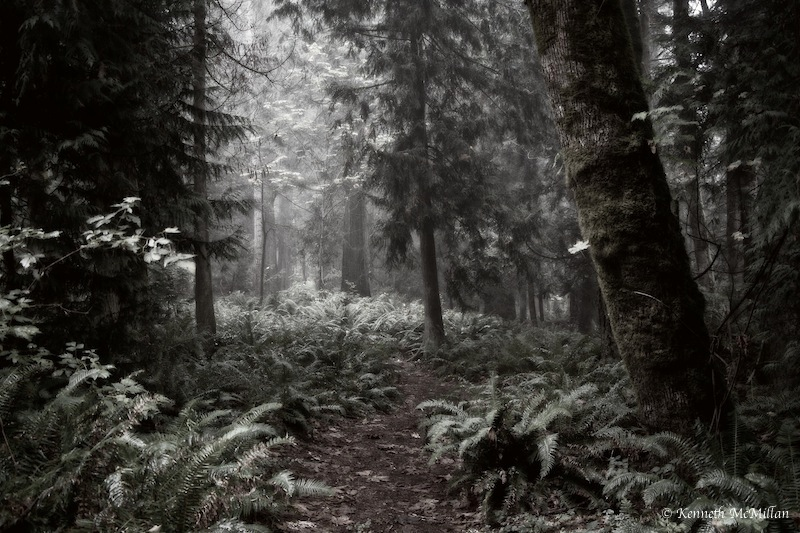 Fern Path_watermarked