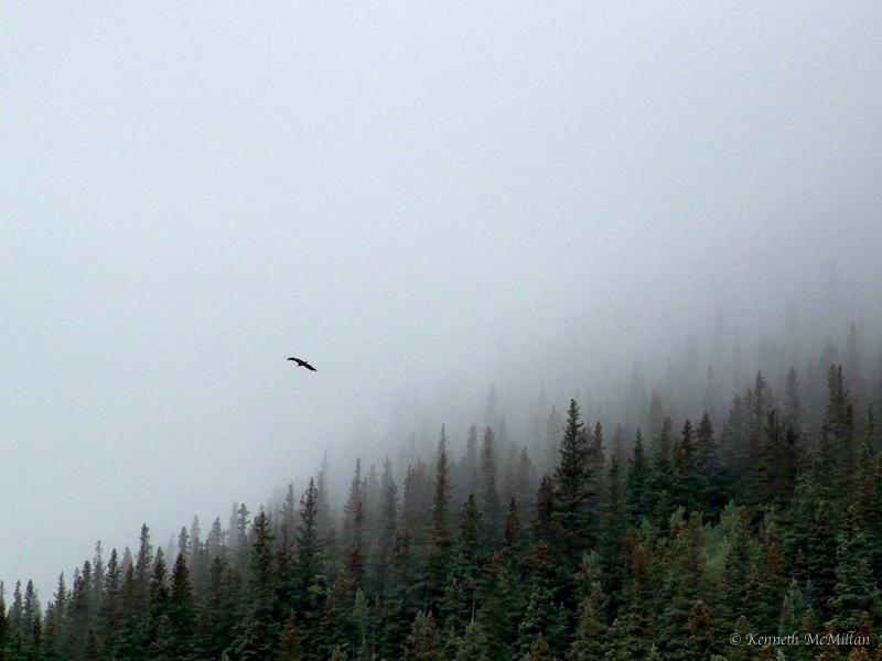 Eagle & Mist_watermarked