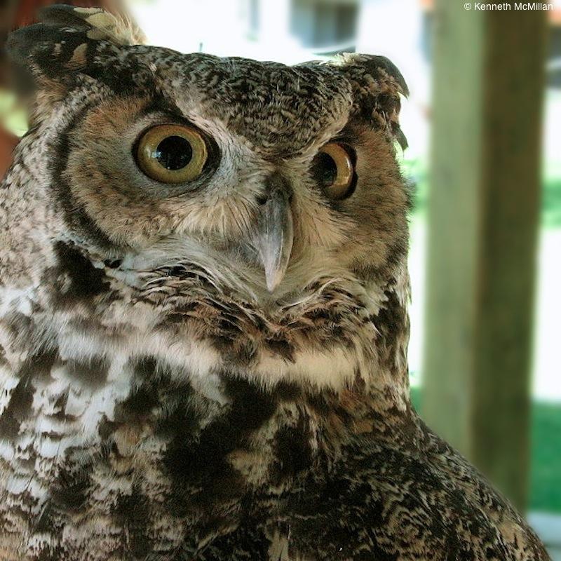 Location: Alberta Birds of Prey Foundation, Coaldale, Alberta, Canada