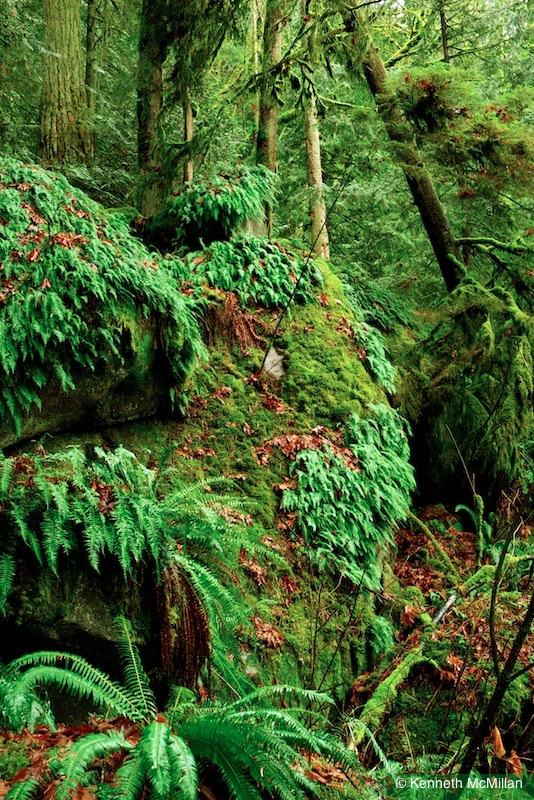 Ferns and Moss_watermarked