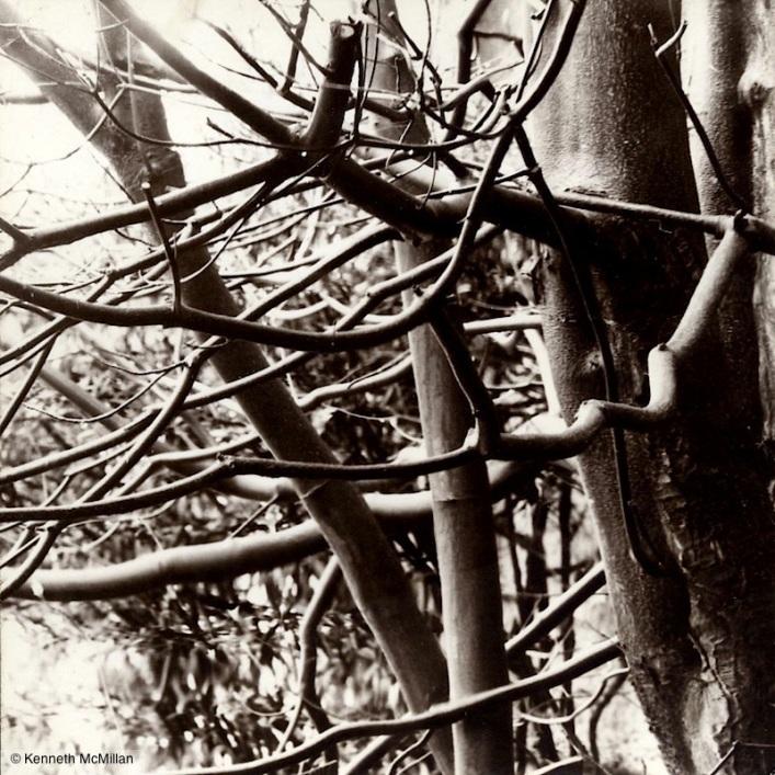 Dogwood_watermarked