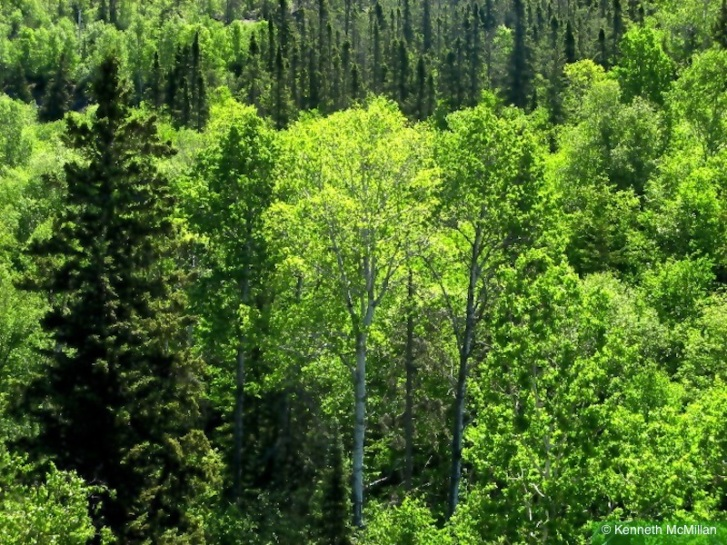 Forest_watermarked