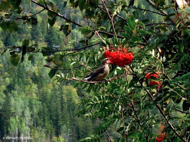 Bird_watermarked