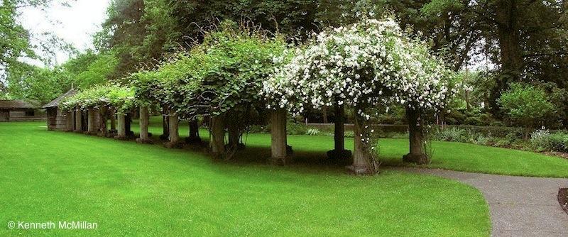 Location: Filberg Park, Comox, British Columbia, Canada