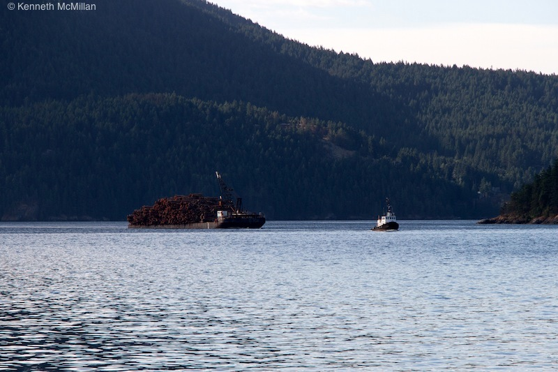 A common sight. A tugboat and barge full of logs heading to a local pulp mill.