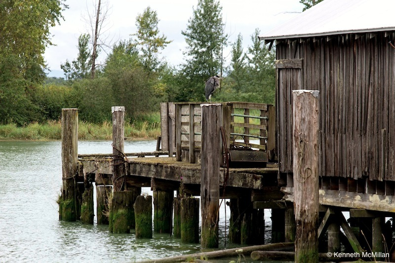 The Steveston Riverfront