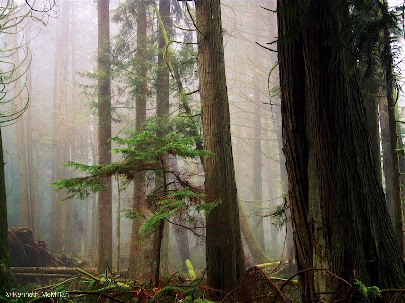 Foggy Woods 12_watermarked