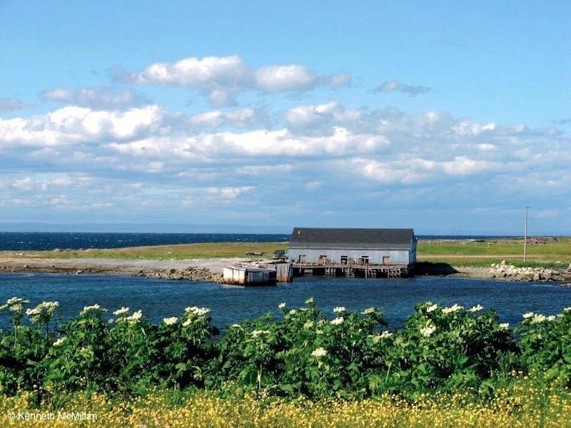Location: The Viking Highway, Newfoundland, Canada
