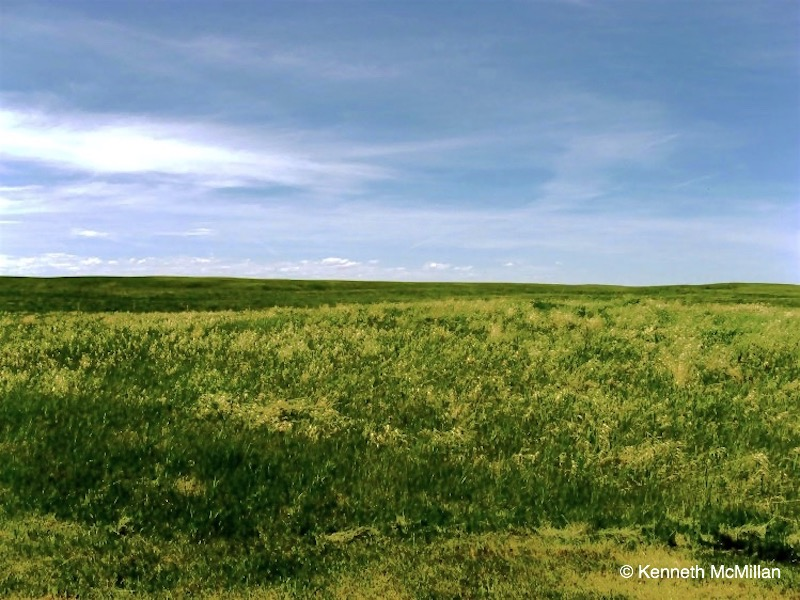 Field & Sky_watermarked