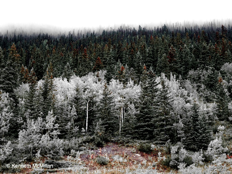 david-thompson-highway-trees_watermarked